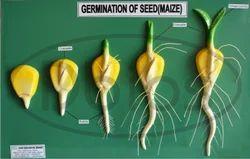 Botany Models
