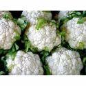 A Grade Fresh Cauliflower