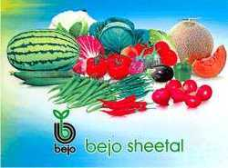 Bejo Sheetal Seeds/kalash Seeds
