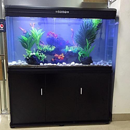 Fish Aquarium In India 1000 Aquarium Ideas