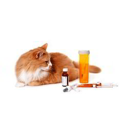 Homeopathic Veterinary Medicines - Homeopathic Medicine For