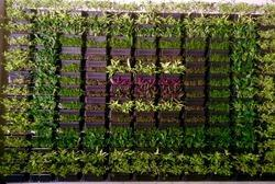 Vertical Gardens in Pune Maharashtra Suppliers Dealers