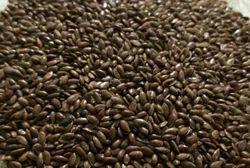 Lin Seeds