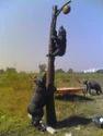 FRP Animals Statue