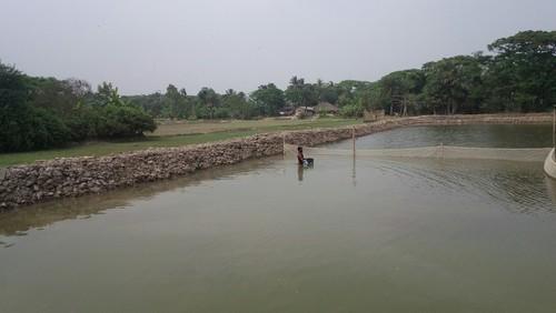 Shingi Fish Farming Training