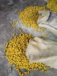 BTC Yellow Tramric Bulb, for Spices