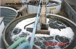 Bacteria For Bio Degradation Of Effluent In Dairy Plant
