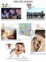 Primary School Charts