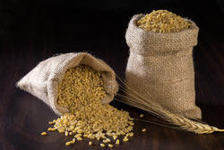 Polished Durum Wheat ( Shelled Wheat)