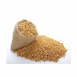 Raw Wheat