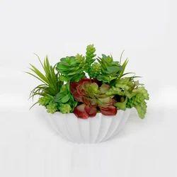 Succulent Plant (AP-22)