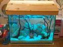 Aquarium Fish Tank Cleaning Service.