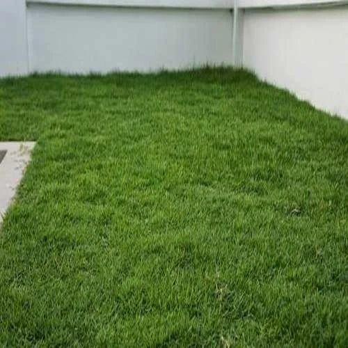 Artificial Grass Carpet at Rs 50