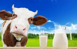 Cow Raw Milk