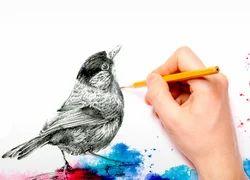 Graphic Designing Illustration Services