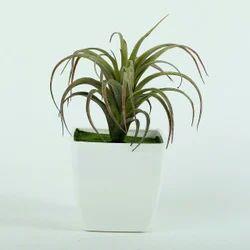 Hyperboles Artificial Mini Cactus Plant