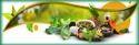 Herbal PCD Pharma Franchise In Punjab