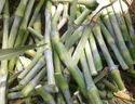 Super Napier Grass Seed