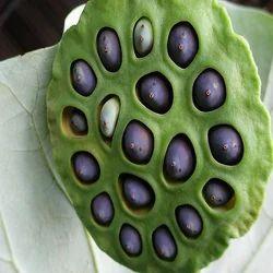 Lotus Seeds Wholesale Price Amp Mandi Rate For Kamal Ke Beej