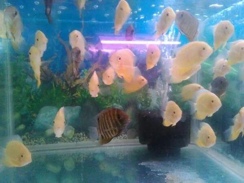 rainbow aquarium wholesaler of aquarium fish big fish from chennai