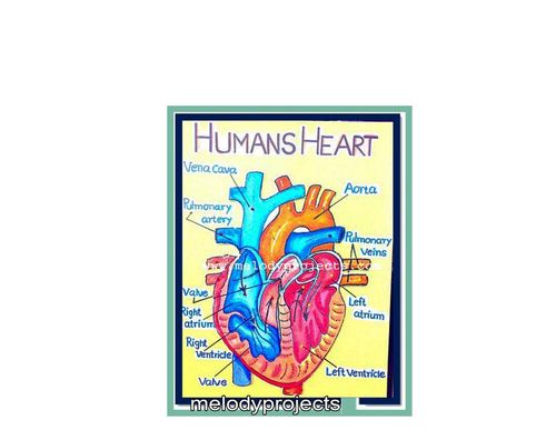Human Heart With Lights Models