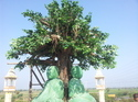 Outdoor Artificial Tree for Jain Mandir