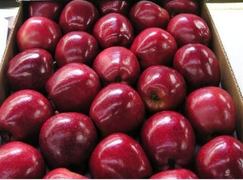 Red Delicious Apple At Rs 1500 Box Savadisht Lal Seb Royal Gala