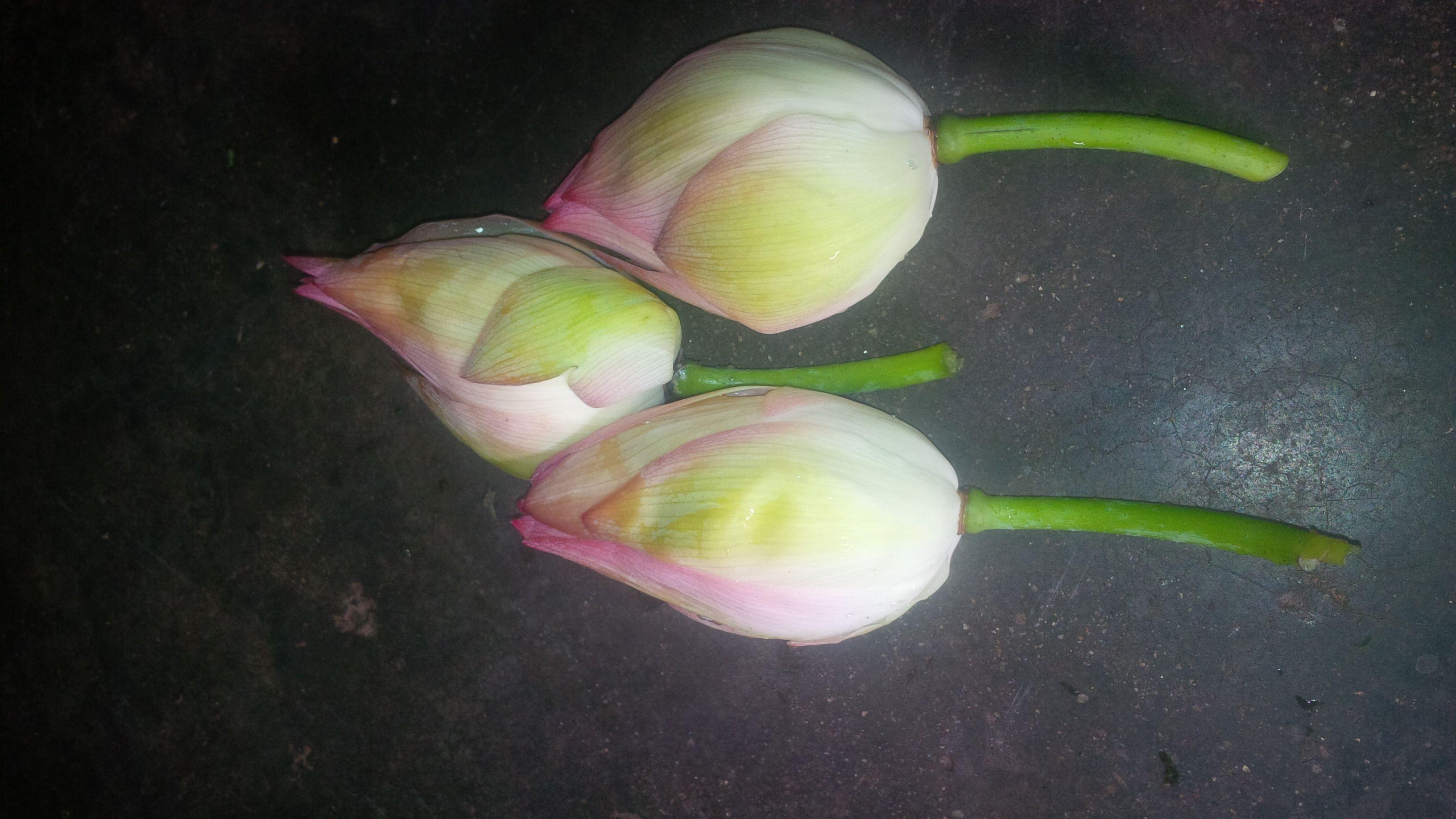 Fresh flower in madurai tamil nadu suppliers dealers retailers mnv flower shop izmirmasajfo