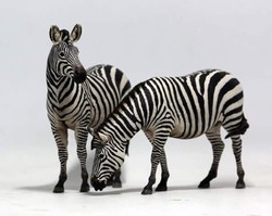 FRP zebra Animal Statue