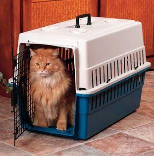 7 Tips Membawa Kucing saat Berpergian