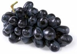 Image result for black grapes pictures free