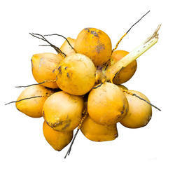 Yellow Coconut