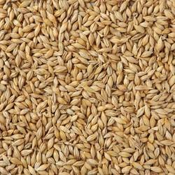 Imperial Malt Malted Barley, For Food, Bakery & Breweries