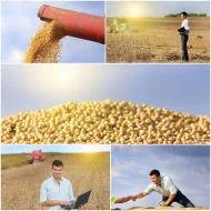 Organic Certified Maize