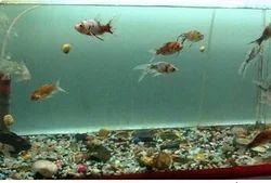 Aquariums Fish