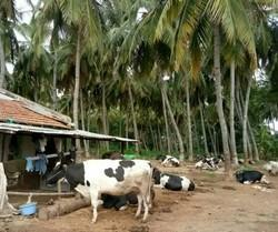 Agricultural Land Leasing in India