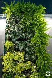 Hyperboles Real Vertical Gardening Services
