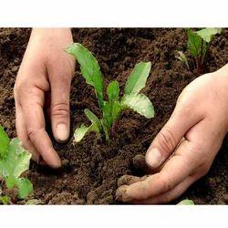 SBT Agricultural Biopesticides, Paper Drum, 25 Kg