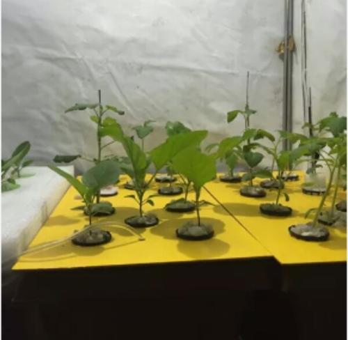 Hydroponic Leafy Grow Kit Dwc1010 Jadi Buti Ke Podhe Radongrow