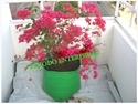 Outdoor Flower Grow Bag