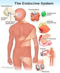 Endocrinology Chart