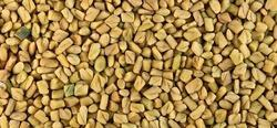 Methi Seed/ Fenugreek Seed