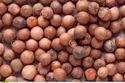 Chandan Seeds