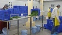 Food Cold Storage Room Cleaning Service