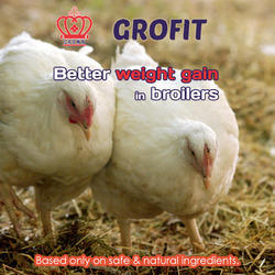 Poultry Feed Additives- Broilers
