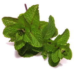 Spearmint Terpene