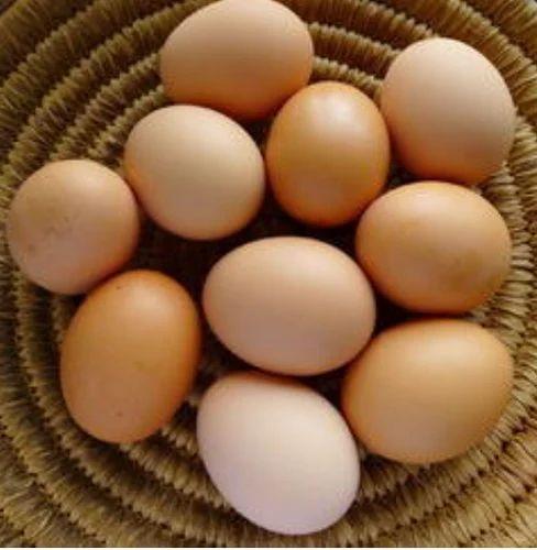 Kadaknath Chicken- SM Poultry Farm - Wholesale Supplier of Eggs