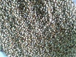 Green Millet - Bajra