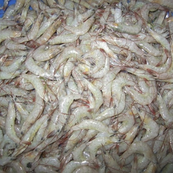 Seafood in Kochi - Latest Price & Mandi Rates from Dealers