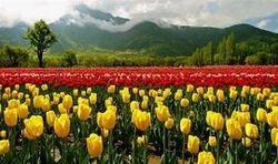 Kashmir Vaishnodevi Tours